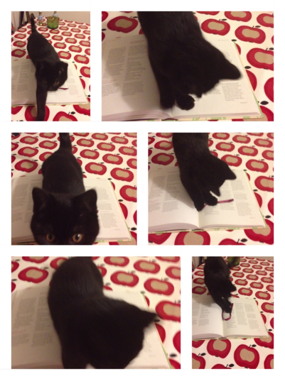 Even my kitten loves this book!